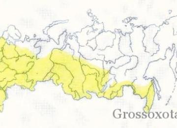 Места обитания и образ жизни барсука