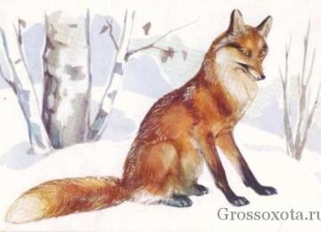 Биология лисицы