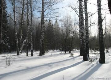 Поиск глухариного тока или один день в весеннем лесу