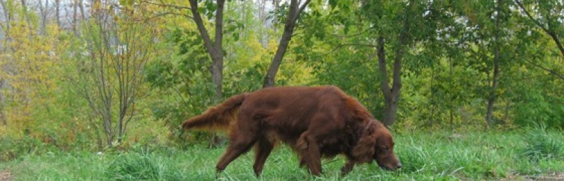 Уход за охотничьей собакой