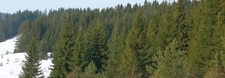 Способы ориентирования в лесу без компаса